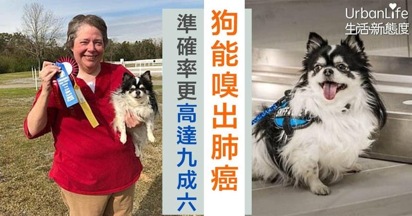 【癌症檢測】美國研究:狗隻能嗅出肺癌 準確率更高達96%
