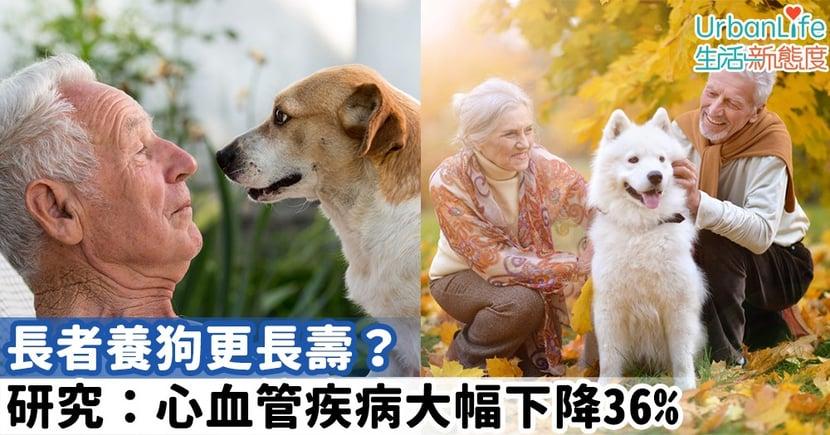 【老人與狗】長者養狗更長壽?研究:心血管疾病大幅下降36%