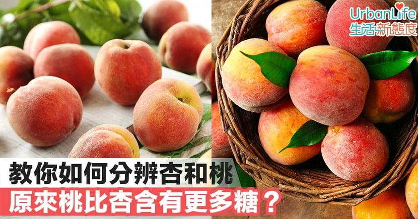 【水果知識】教你如何分辨杏和桃 原來桃比杏含有更多糖?