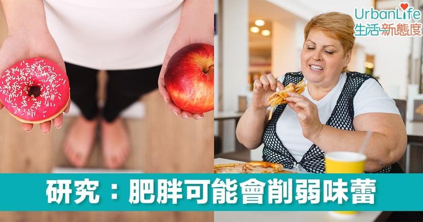 【享受美食】研究:肥胖可能會削弱味蕾