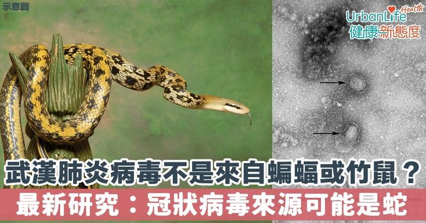 【武漢肺炎】病毒不是來自蝙蝠或竹鼠?最新研究:冠狀病毒來源可能是蛇