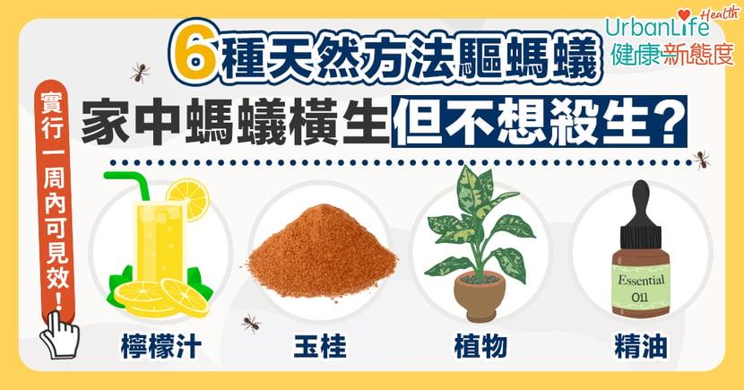 【消滅螞蟻】家中螞蟻橫生但又不想殺生?6種天然方法驅逐螞蟻一周內見效