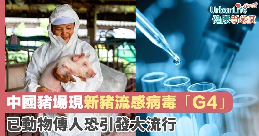 【新型豬流感】中國豬場現新豬流感病毒「G4」 已動物傳人恐引發大流行