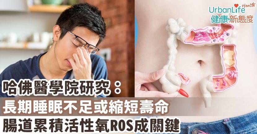 【睡眠不足影響】哈佛醫學院研究:長期睡眠不足或縮短壽命 腸道累積活性氧ROS成關鍵