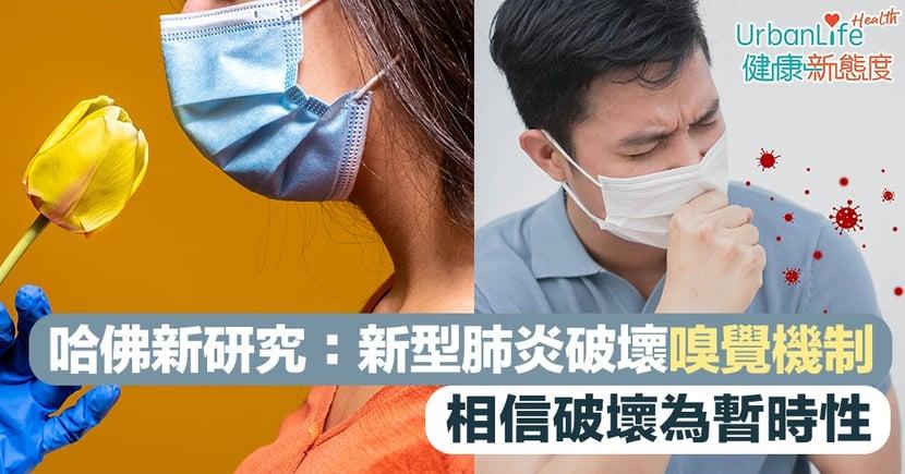 【新型肺炎後遺症】哈佛最新研究:新型肺炎破壞嗅覺機制 相信破壞為暫時性