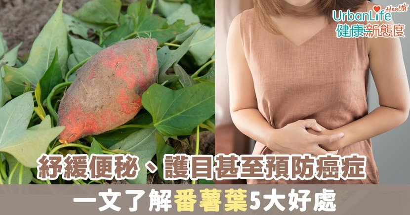 【番薯葉營養】紓緩便秘、護目甚至預防癌症 一文了解番薯葉5大好處