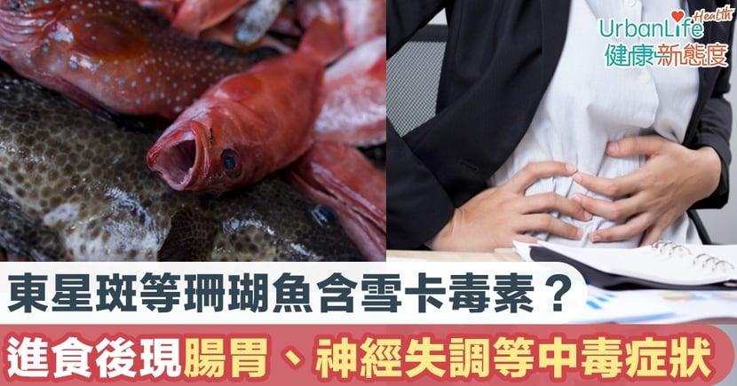 【食物中毒】東星斑等珊瑚魚含雪卡毒素?進食後會出現腸胃、神經失調等中毒症狀