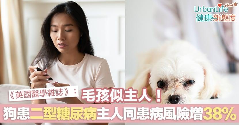【糖尿病】《BMJ》:毛孩似主人!狗患二型糖尿病主人同患病風險增38%