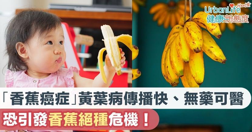 【香蕉絕種】「香蕉癌症」黃葉病傳播速度快、無藥可醫 恐引發香蕉絕種危機!