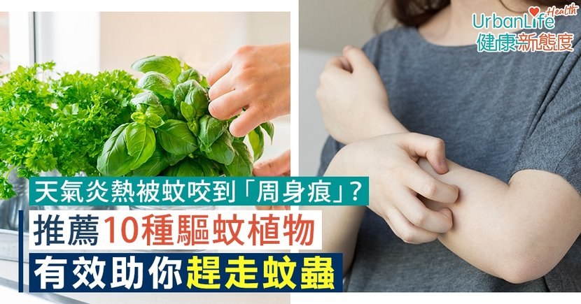 【驅蚊植物】天氣炎熱被蚊咬到「周身痕」?推薦10種驅蚊植物助你趕走蚊蟲