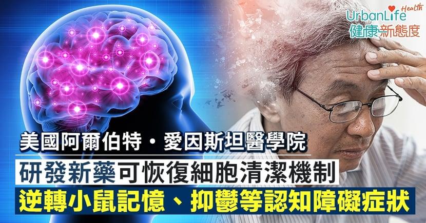 【認知障礙治療】美國阿爾伯特・愛因斯坦醫學院研發新藥 可恢復細胞清潔機制、逆轉小鼠認知障礙症狀