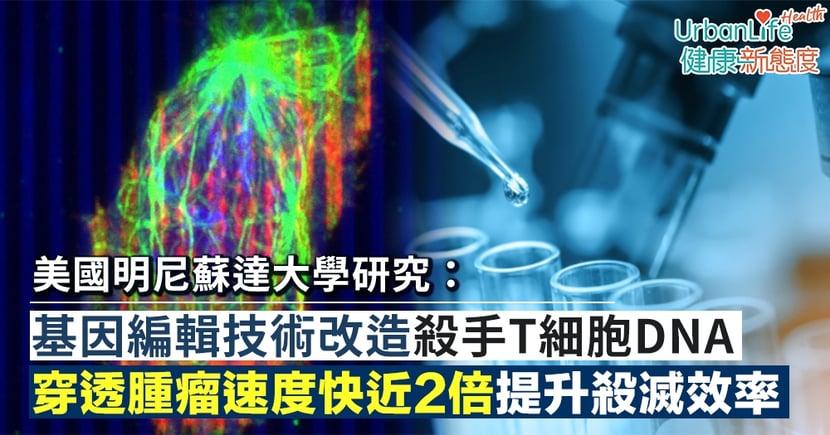 【癌症治療】美國明尼蘇達大學研究:基因編輯技術改造殺手T細胞DNA 穿透腫瘤速度快近2倍提升殺滅效率