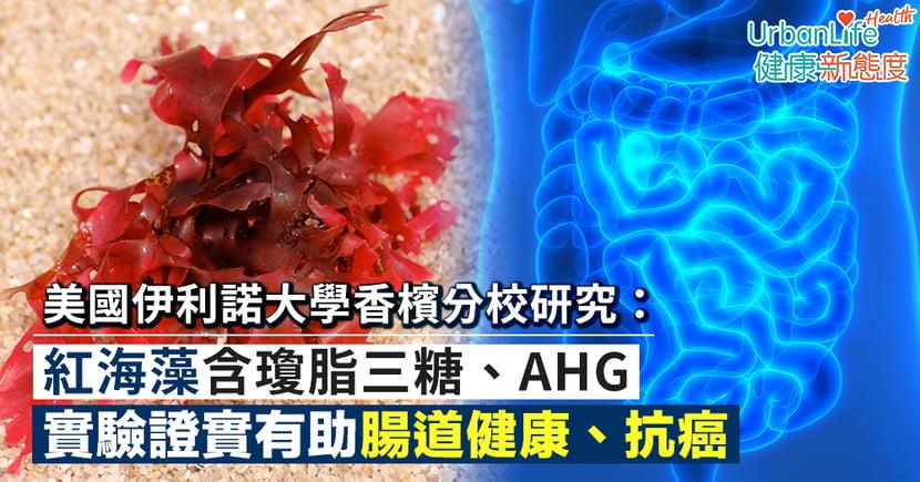 【紅海藻功效】美國伊利諾大學香檳分校研究:紅海藻含瓊脂三糖、AHG助腸道健康、抗癌