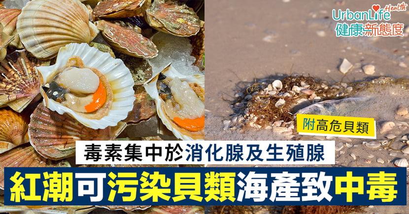 【貝類中毒】紅潮可污染貝類海產致中毒 毒素集中於消化腺及生殖腺(附高危貝類)