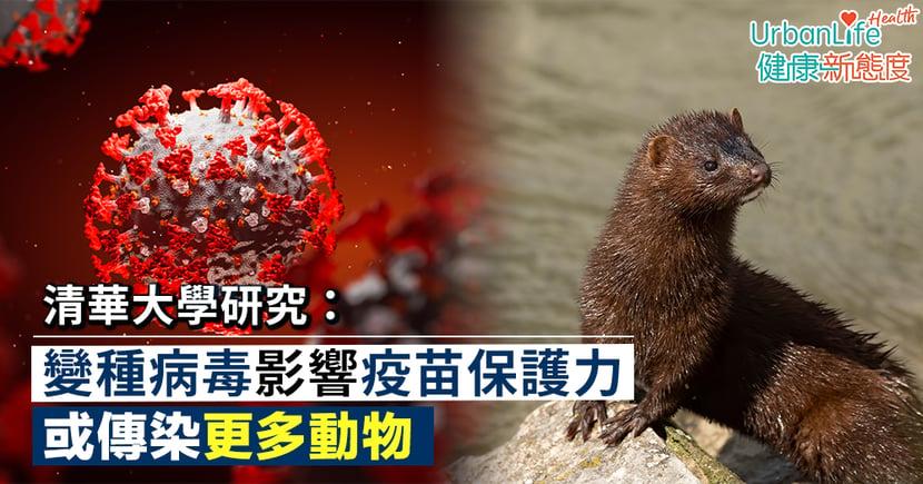 【變種新冠病毒】清華大學研究:變種病毒影響疫苗保護力 或傳染更多動物